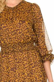 Dante 6 |  Dress with panther print Okala | brown  | Picture 7
