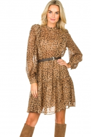 Kocca |  Dress with panther print Ranuncolo | brown  | Picture 4