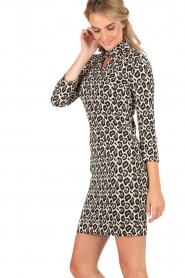 Leopard print dress Novalie | print