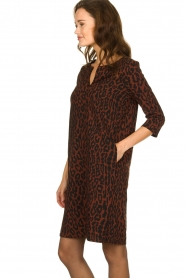 Aaiko |  Dress with panther print Mazaron | rust brown  | Picture 4