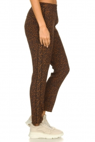 Set |  Pants with leopard print Tigra | brown  | Picture 4