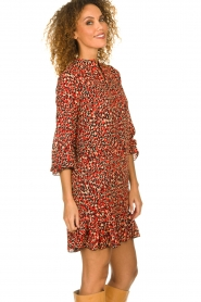 Freebird |  Leopard printed dress Diba | red   | Picture 5