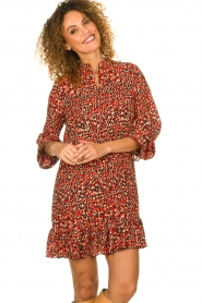 Freebird |  Leopard printed dress Diba | red   | Picture 4