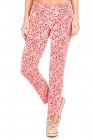 Amatør | Pantalon Stocks | rood  | Afbeelding 2