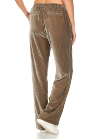 Dante 6 |  Velvet pants Seduce | taupe  | Picture 6