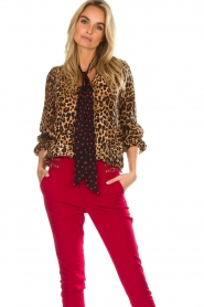 Set |  Top Polka | brown  | Picture 4