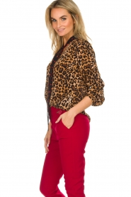 Set |  Top Polka | brown  | Picture 5