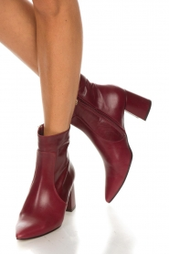 Noe |  Leather ankle boots Nippie | bordeaux  | Picture 2