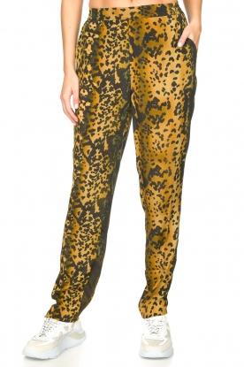 Dante 6 |  Leopard pants Verdict | black